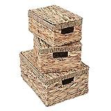 Mendler 3er Set Aufbewahrungsbox HWC-C23, Truhe Kiste Box mit Deckel, Wasserhyazinthe naturfarben